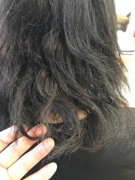 高難易度縮毛矯正で髪がチリチリに。。【ビビリ矯正】でビビリ毛直し。原宿・表参道『1000人をツヤ髪にヘアケア美容師の挑戦』